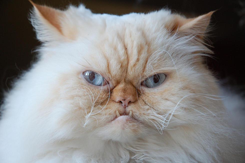 Warrensburg Passes TNR Ordinance to Address Feral Cat Problem